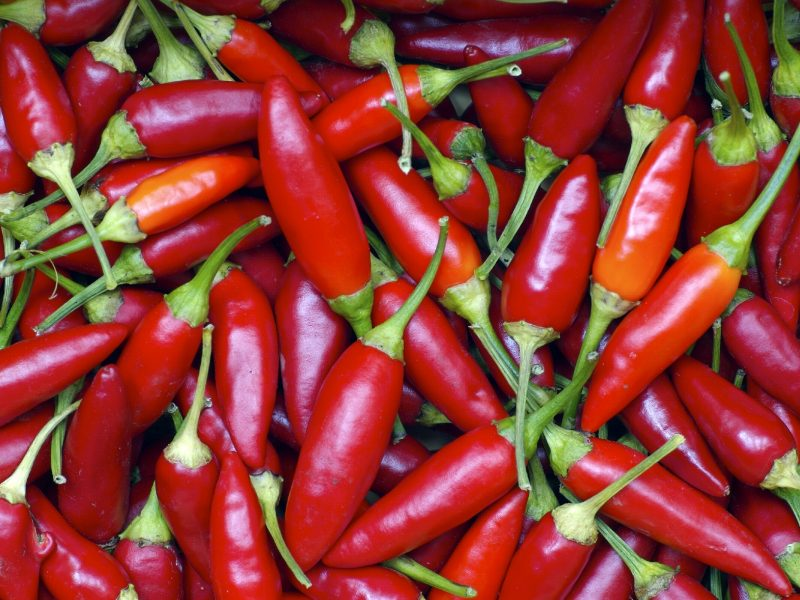 chilipeppershires