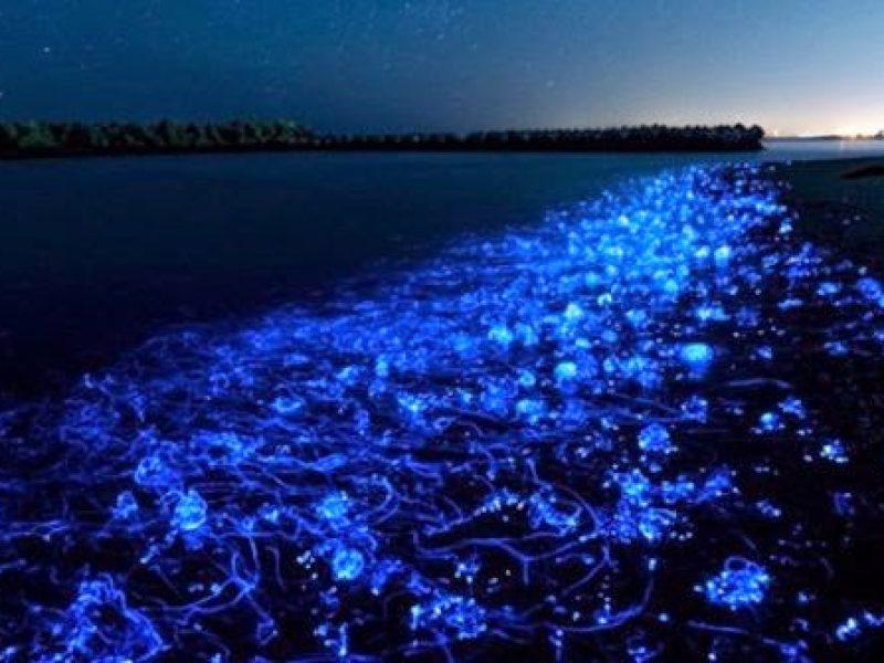 pantai-bertabur-bintang--teluk-toyama-jepang-rev2